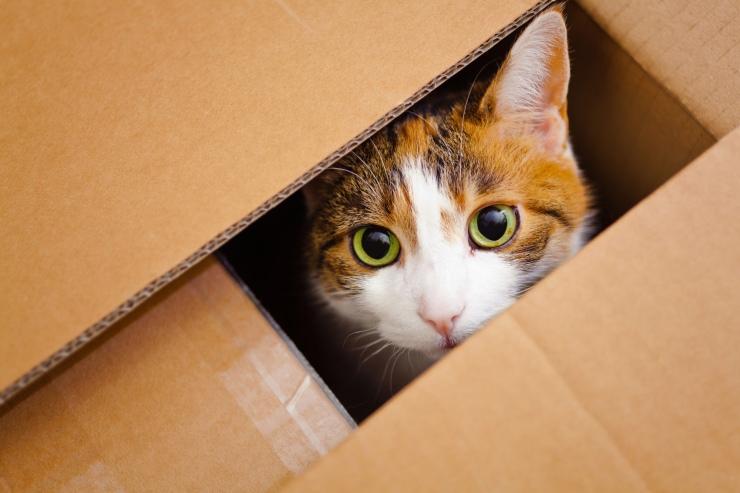 Cat  in a bax